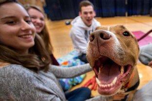 """Animalistas piden que se deje de llamar """"mascotas"""" a los animales domesticados"""