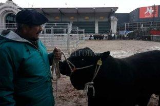 """""""Apolo"""", el primero en llegar a la Rural de Palermo -  -"""