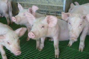 Cerdos: los grandes ausentes en la Expo Rural de Palermo