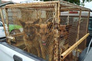 Dieron de alta a la mujer atacada hace quince días por tres perros