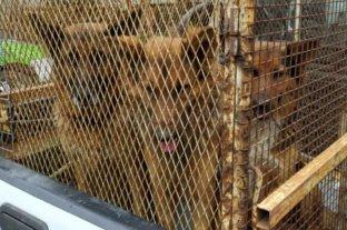 Dieron de alta a la mujer atacada hace quince días por tres perros -  -
