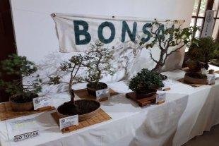 Muestra de Cultivadores de Orquídeas y Bonsai