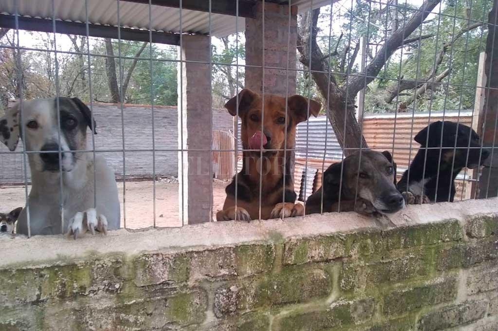 Crédito: Gentileza de la Asociación Civil Protectora de Animales