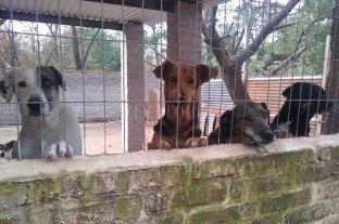 Los Palmeras donan al refugio de animales lo ganado en un programa televisivo