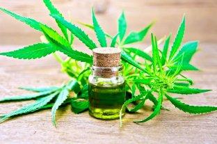 Aceite de cannabis en el mercado negro