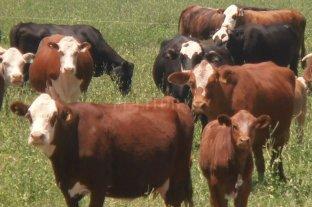 """Se actualiza el plan de control contra el mal de """"la vaca loca"""""""