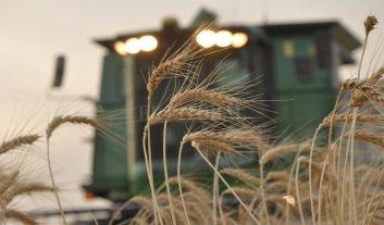 El USDA aumentó la perspectiva de la próxima cosecha de trigo a 20,5 millones de toneladas