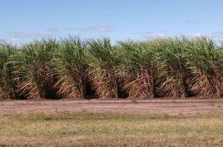 La provincia apoya la siembra de 500 hectáreas de caña de azúcar
