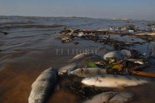Advierten sobre una posible mortandad de peces en los ríos