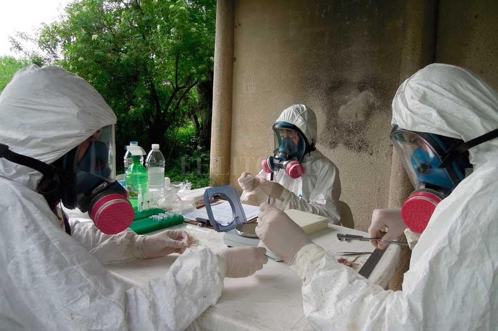 Delta. Las muestras de campo fueron recolectadas en toda la zona del delta del río Paraná, cerca de Campana, Buenos Aires. Crédito: Gentileza LEcEn.