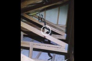 Video: Escuchaba ruidos en el techo de su casa y había dos serpientes pitones peleando