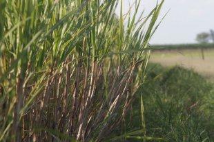 Pocos interesados en los préstamos de la provincia para la siembra de caña