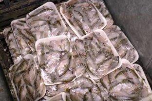 Pescadores de Alto Verde donaron elaborados porque no los pueden vender -
