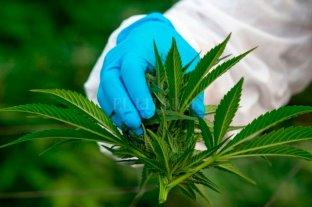 Tailandia empezó a suministrar cannabis medicinal a personas con cáncer