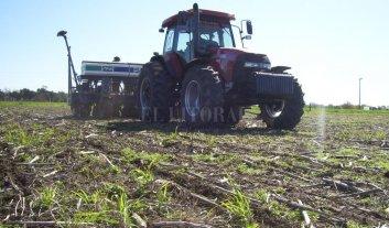 Maíz, la mejor apuesta agrícola en el centro norte santafesino