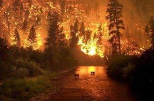 Incendios en el Amazonas: Ambientalistas argentinos protestarán en la embajada de Brasil