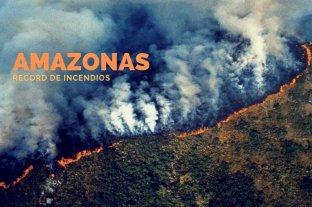 Infografía: los impactantes números de los incendios en el Amazonas -  -