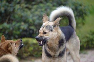 Perros peligrosos: actualmente el  registro cuenta con 40 inscriptos