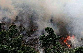 Más de 8 millones de personas firmaron peticiones en la web para salvar el Amazonas