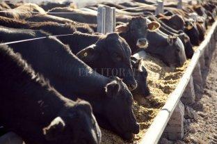 Efecto dólar - inflación: ¿Cómo impacta en el negocio ganadero?
