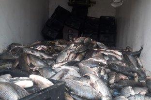 Gendarmería secuestró más de una tonelada de pescado en mal estado en Santa Fe