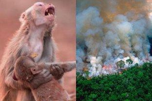 El origen de las fotos falsas de los incendios en el Amazonas