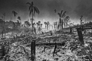 Recuperar el ecosistema del Amazonas llevará entre 200 y 500 años, según especialista