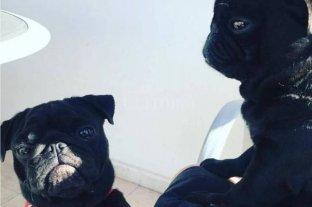 Le robaron dos perros y le pidieron rescate