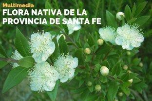 Conocé la flora nativa de Santa Fe