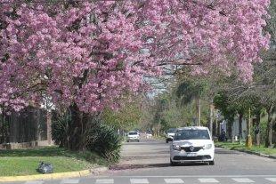 Hoy se celebra el Día del Árbol en Argentina