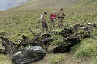 Mendoza demandó a los responsables por la muerte de 34 cóndores en Malargüe