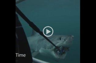 Video: Intentó filmar a un tiburón blanco y terminó perdiendo su cámara