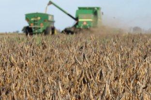 Uno de cada cuatro dólares exportados proviene de la soja y sus derivados