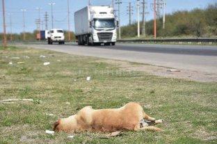 Peligro en Circunvalación Oeste: perros muertos, basura y falta de iluminación