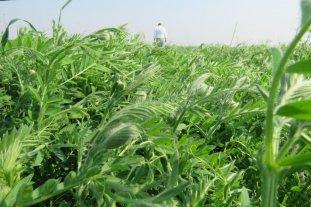 Agricultura circular: cultivos que sirven a otros cultivos