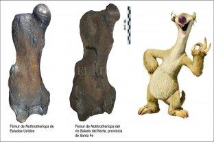Hallan el fémur de un perezoso que vivió hace 90 mil años a orillas del río Salado