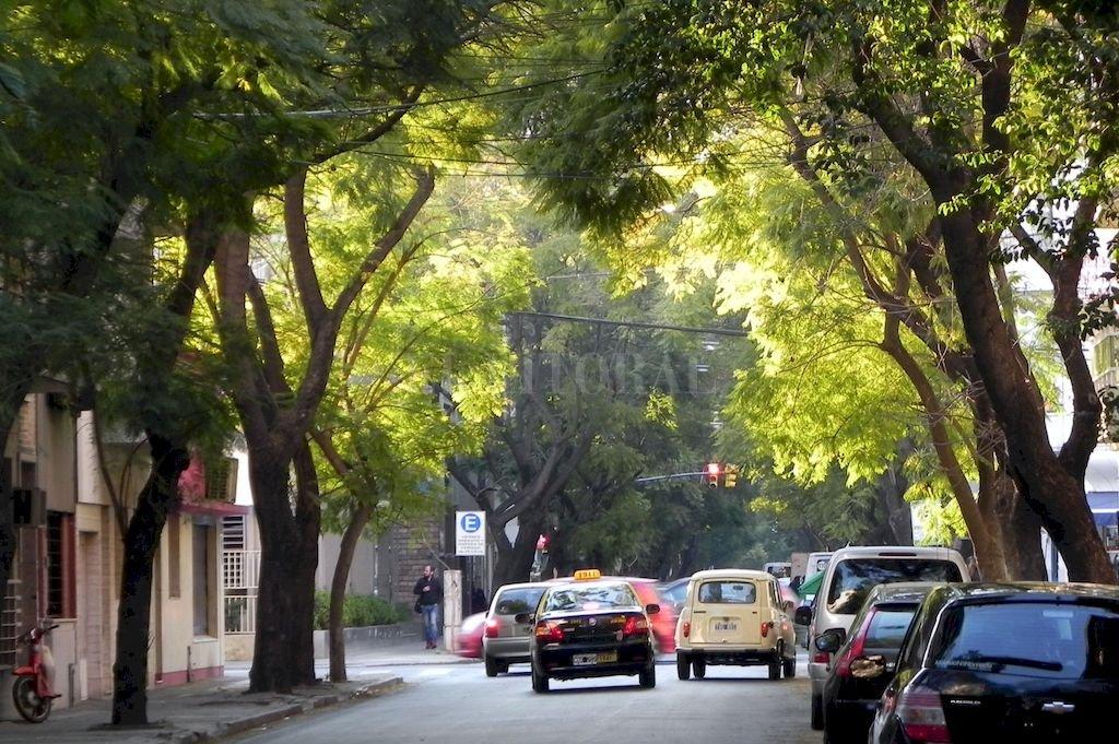 """En su artículo 2, la ordenanza de adhesión declara como política pública ambiental de la ciudad la promoción y conservación del arbolado, """"para la generación de un medio ambiente sustentable"""". Crédito: Archivo El Litoral"""