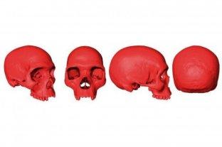 Reconstrucción 3D: cómo era el cráneo del ancestro del Homo Sapiens