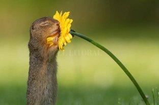Viral: la secuencia de la ardilla y la flor enternece en las redes