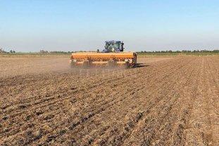 Avanza a buen ritmo la siembra de maíz