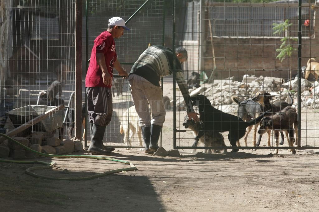 La Asociación se dedica a la contención y refugio a unos 700 perros de la calle: muchos aparecen heridos o en malas condiciones. Los sanan y luego los otorgan en adopción. Ahora, la entidad tiene su predio propio. <strong>Foto:</strong> Archivo El Litoral / Mauricio Garín