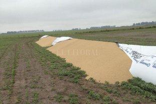 Agroindustrias piden la ley contra el delito rural -  -