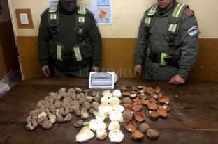 """Intentaba ingresar cocaína por Jujuy en """"papas de cerámica"""""""