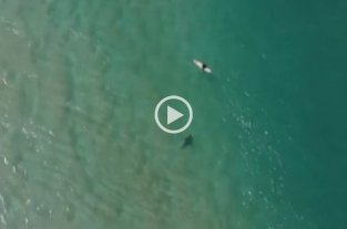 Video: Un drone alertó a un surfista de un posible ataque de tiburón