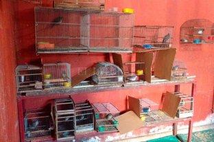 Rescataron diversos animales en cautiverio en Santa Fe y Santo Tomé -