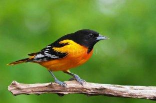 América perdió la cuarta parte de sus aves en los últimos 50 años