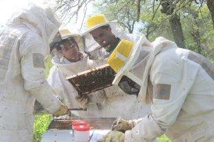 Varroa: multiplican colmenas que se limpian a sí mismas