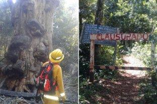 Quiso hacer mate e incendió el árbol más antiguo de Misiones