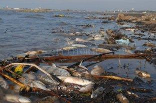 Advierten sobre posible mortandad de peces