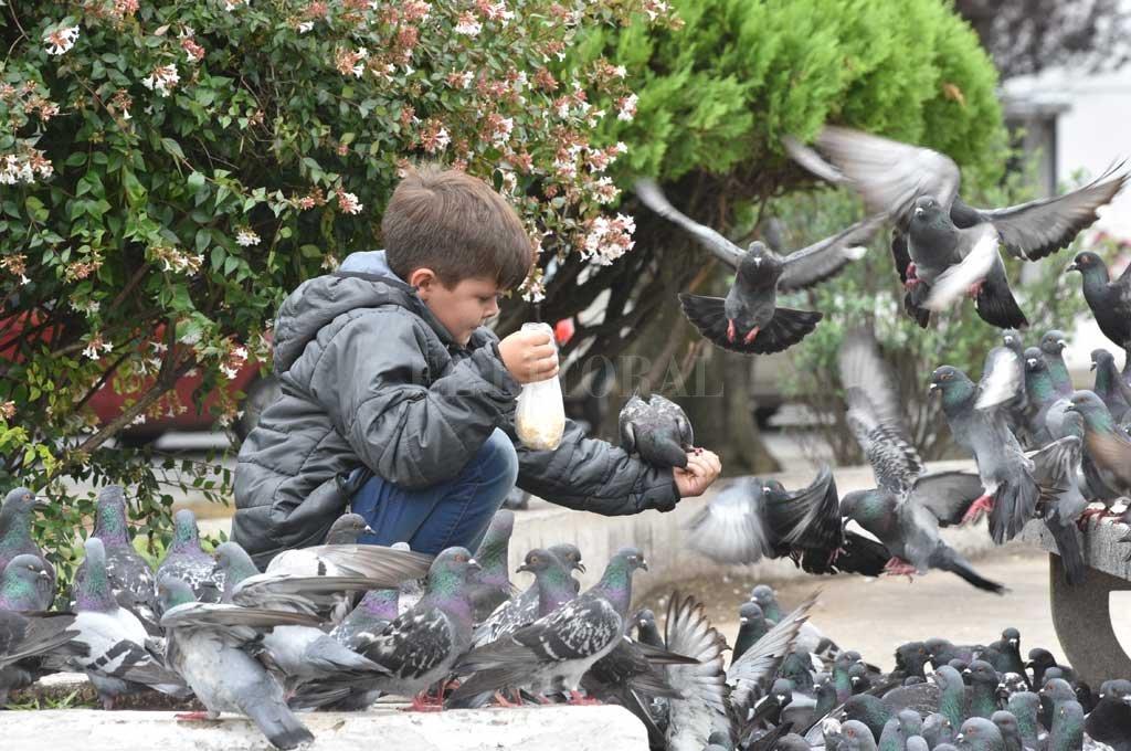 Lograr un equilibrio poblacional de palomas urbanas con el mayor grado de eficacia posible y respetando la coexistencia con las personas, es uno de los objetivos centrales del proyecto. Crédito: Archivo El Litoral / Flavio Raina